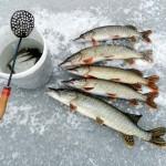 Что нужно для зимней рыбалки на Байкале?