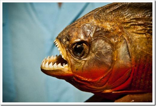 Какая самая опасная рыба в мире?