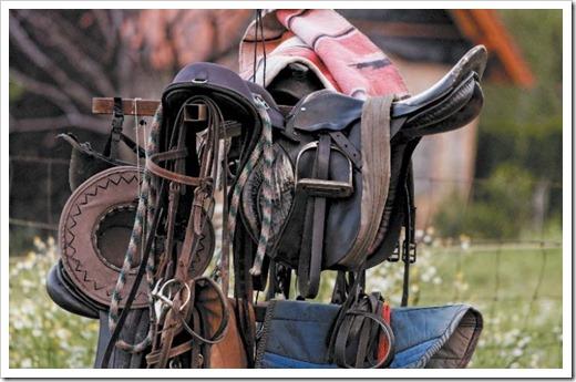 Как правильно ухаживать за кожаной амуницией для лошадей